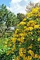 Chelsea Physic Garden 15052013 080.jpg