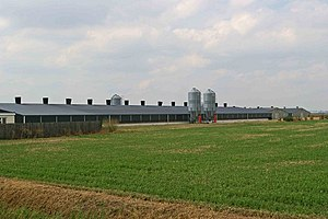 Faccenda Group - Industrial chicken farm operated by the Faccenda Group on the Marsh Road east of Burnham-on-Crouch