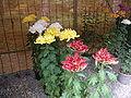 Chrysanthemum Doll and Flower Festival 06.JPG