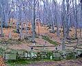 Cmentarz wojskowy Nr.69 w Przegoninie, dzisiaj Bodaki, gmina Sękowa, pow. Gorlice, woj. Młp. (2).JPG