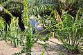 Colección Palmetum de Santa Cruz de Tenerife 04.JPG
