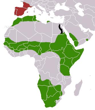 Common Genet area
