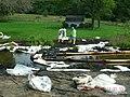 Contaminated soil (4888593988).jpg