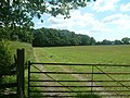 Cook's Coppice - geograph.org.uk - 511439.jpg