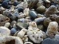 Coral shore (3838618627).jpg