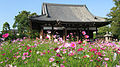 Cosmos Garden at Hannyaji02.jpg