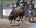 Coulee City Rodeo.jpg