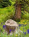 County Rd 14 stumps 20100724 0001 (4844871906).jpg