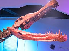 240px cr%c3%a1neo de deinosuchus riograndensis