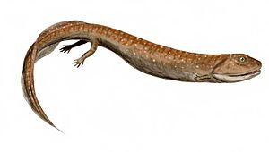 Romer's gap - Crassigyrinus, a secondarily aquatic non-amniote tetrapod from the Romer's gap