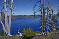 Crater Lake Wizard Island Pines.jpg