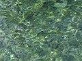 Croatia P8175680 (3953709089).jpg