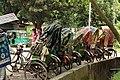 Cycle rickshaw on standby at Chittagong University Road (01).jpg