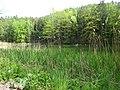 DSC02229 Teich zur Aufzucht autochthoner Fischarten.jpg