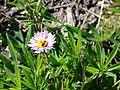 Daisy with fly (7b8f171bbe9945c18ebddfde3974e1e7).JPG