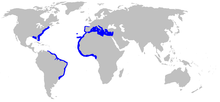 World map with blue shading along the eastern coast of the United States, in the Mediterranean and along the coast of West Africa, and along the eastern coast of South America