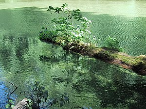 Phototroph - Terrestrial and aquatic phototrophs: plants grow on a fallen log floating in algae-rich water