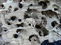 Dead wood Bos mort Lamiot Lille Bois Citadelle 10.JPG