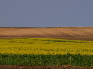 Deliblatska Peščara - Image: Deliblato Sands 3