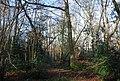 Dense woodland, Binswood - geograph.org.uk - 1207183.jpg