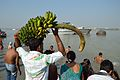 Devotee with Banana Bunch - Chhath Puja Ceremony - Baja Kadamtala Ghat - Kolkata 2013-11-09 4310.JPG