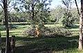 Dhammagiri Forest Hermitage, Buddhist Monastery, Brisbane, Australia www.dhammagiri.org.au 14.jpg