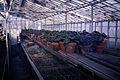 Dicksons Florist greenhouse beds 07.jpg