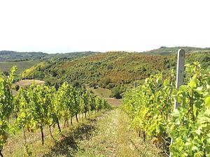 Dilj - Vineyards on the slopes of Dilj mountain near Brodski Stupnik