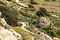 Dingli - Triq Panoramika - Cliffs - Euphorbia dendroides 03 ies.jpg