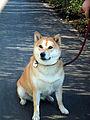 Dog20110929 2.jpg