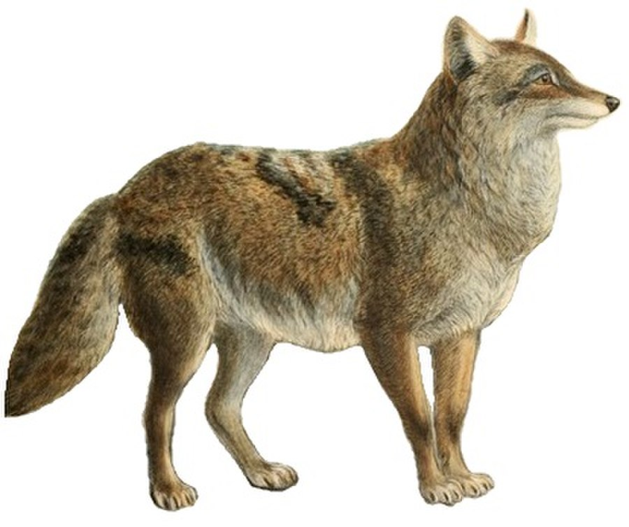 Difference Between Fox And Coyote: Coyote Vs. Hyena - What's The Difference?