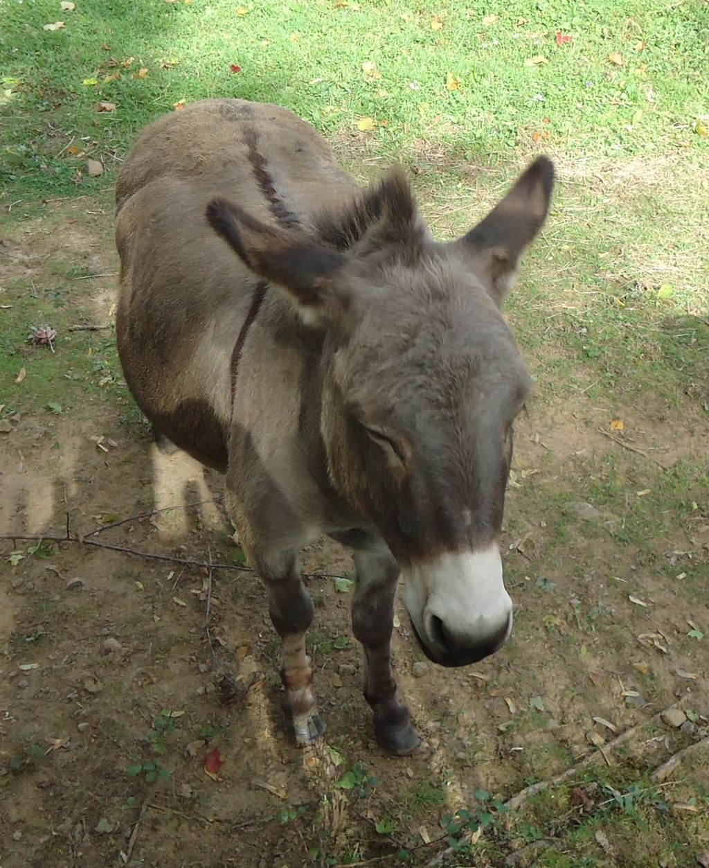 Donkey on farm in New Jersey