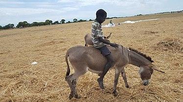 Donkey ride-South Sudan.jpg