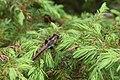 Dragonfly Ridge Sanctuary Door County Wisconsin.jpg
