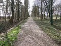 Driveway to Poulton Priory - geograph.org.uk - 350340.jpg