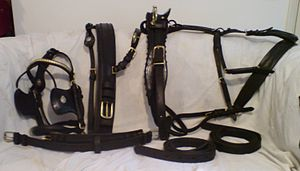 Horse harness - Complete breastcollar harness and bridle, laid out