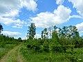 Droga przy brzegu jeziora Sępoleńskiego. - panoramio.jpg