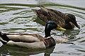 Ducks693.jpg