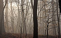 Duke Forest misty morning h.jpg
