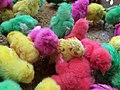 Dyed chicks in Pasty Market 03.jpg