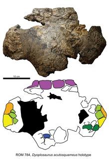 <i>Dyoplosaurus</i> genus of reptiles (fossil)