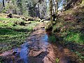 Dzirdravots near Cīrulīši Nature Trails (2).jpg