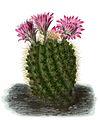 Echinocactus BlKakteenT133.jpg