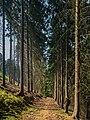 Eisenbahnlinie-Saalestauseen-8132377.jpg