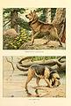 Elkhound, otterhound.jpg