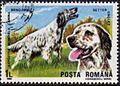 English-Setter-Canis-lupus-familiaris Romania 1990.jpg
