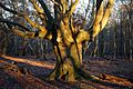 Epping Forest High Beach Waltham Abbey Essex England - tree trunk.jpg