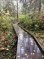 Evans Creek Preserve Boardwalk.jpg