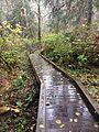 Evans Creek Preserve Boardwalk.jpg