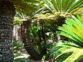 Fale - Giardini Botanici Hanbury in Ventimiglia - 653.jpg